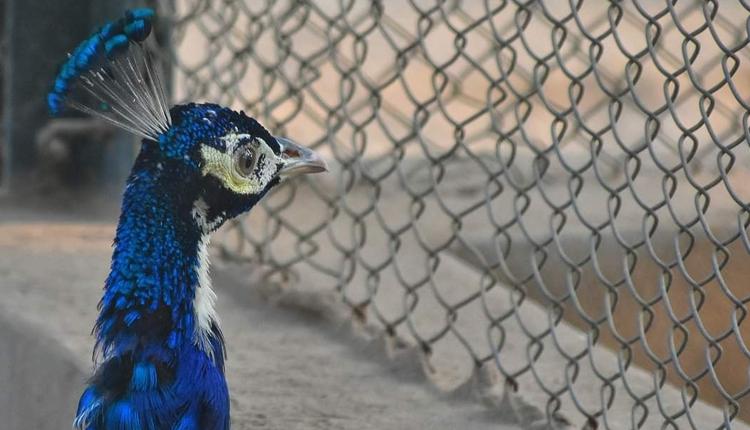 Wildlife park in Faisalabad